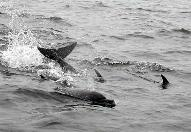 Dolphin watching tours are available in Ballena National Marine Park